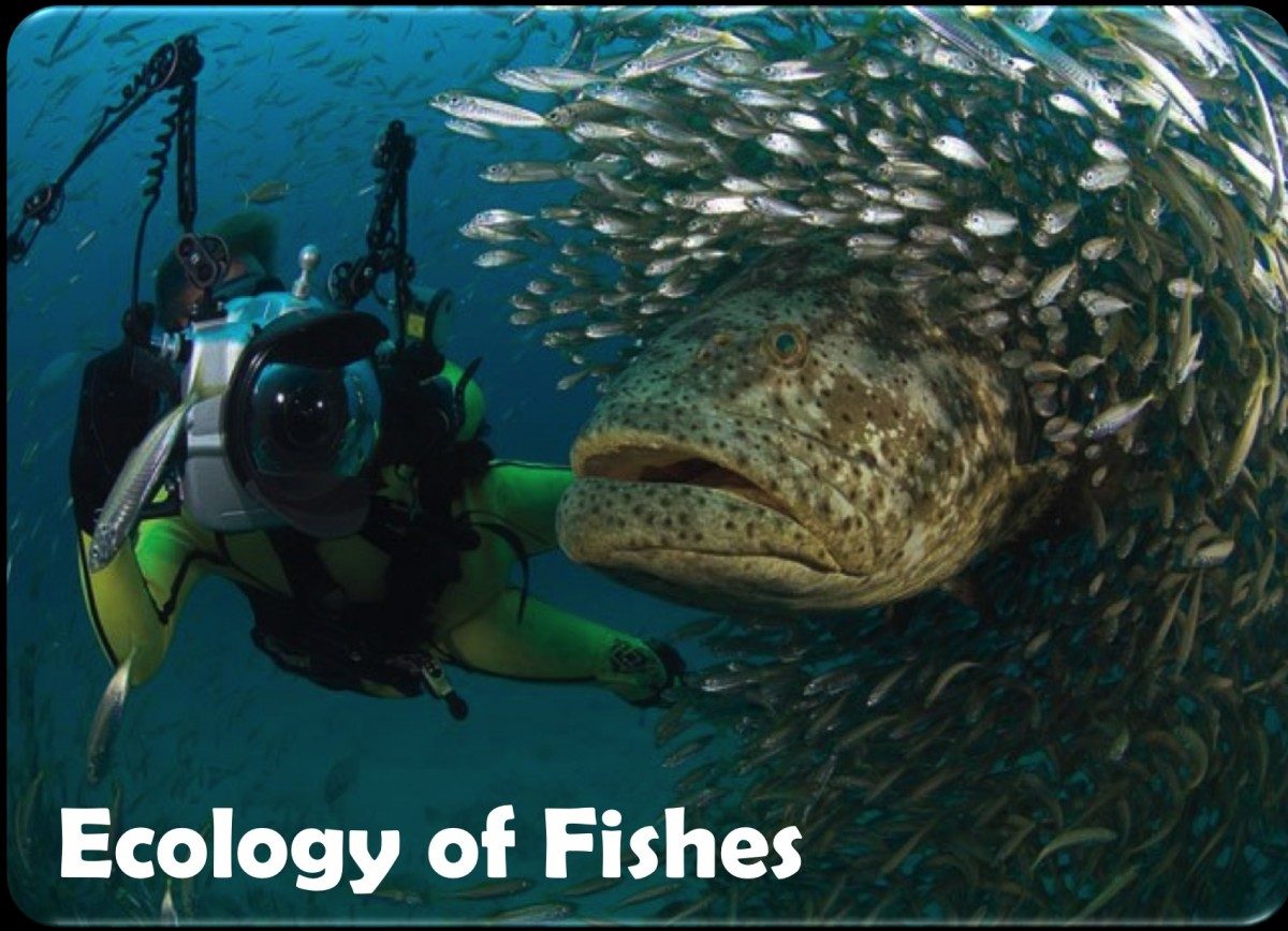 Ecology of Fishes