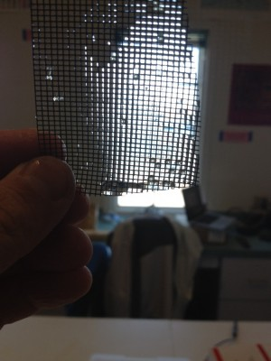 window screen with silverside eggs