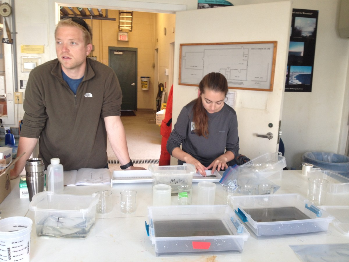 Chris & Molly are measuring silverside adults used to fertilize the first experiment