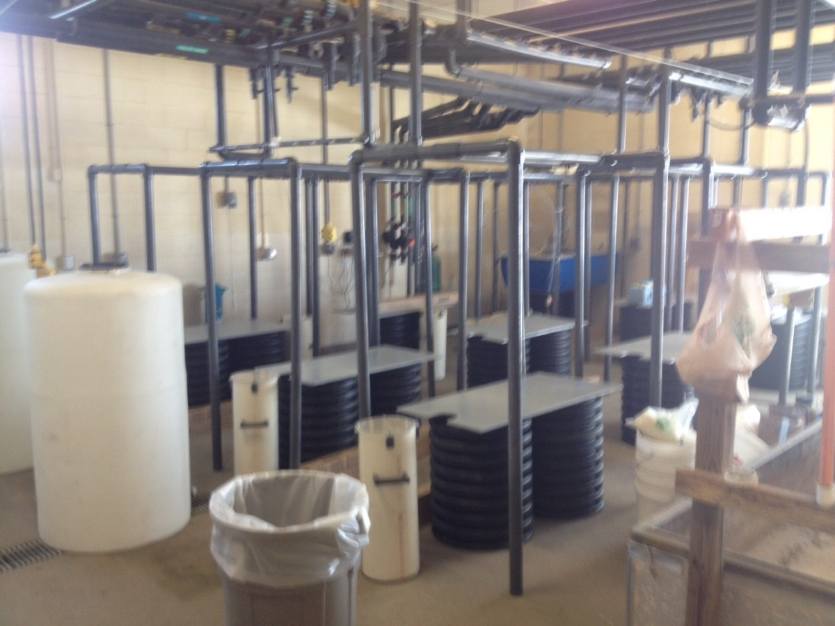 Just the stands and the prototype are where the rearing units will be