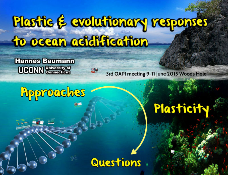 Plastic & evolutionary responses to ocean acidification