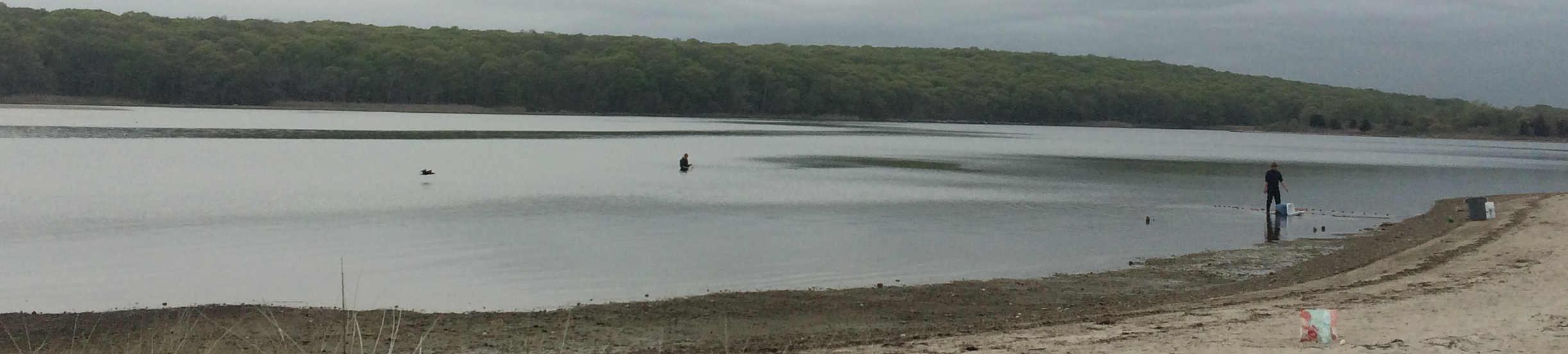 Seining and water sampling in Mumford Cove, CT