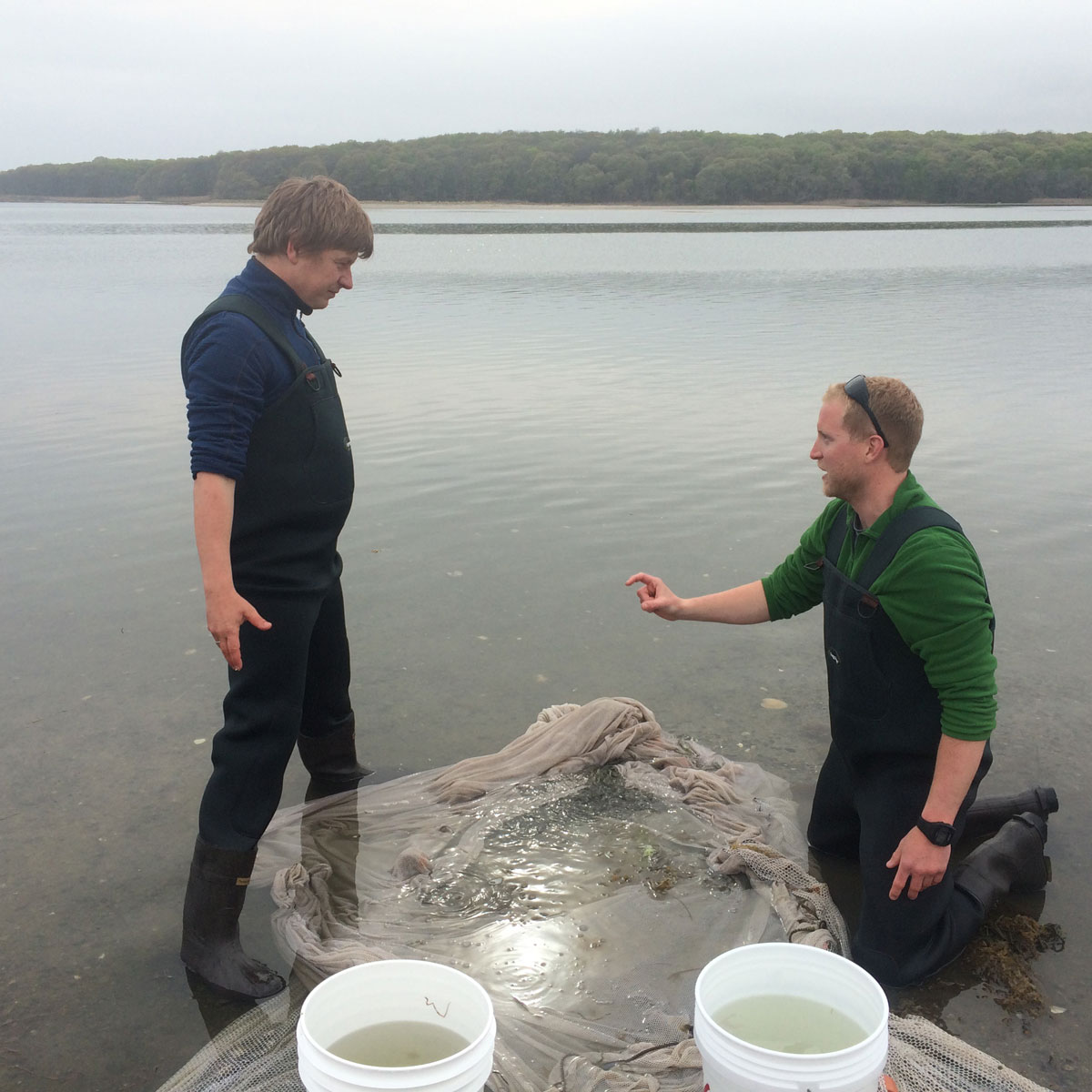 Hannes and Chris in Mumford Cove, discussing how to sort the catch of silversides collected by beach seine