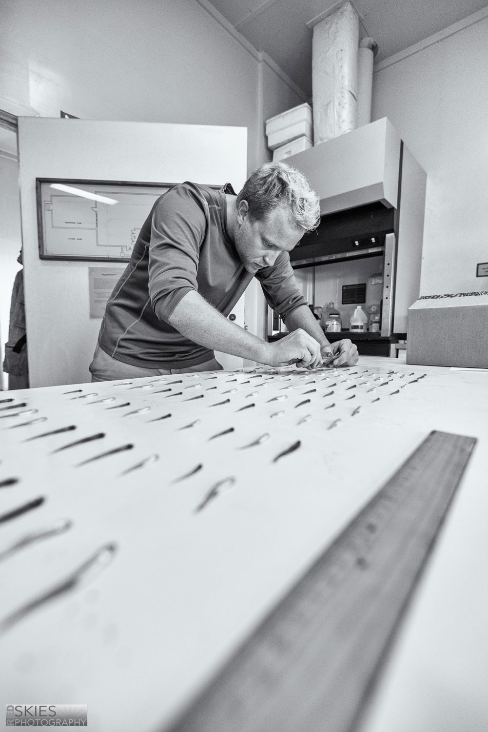 Chris Murray measuring juvenile Atlantic silversides that were reared in our lab for the past four months