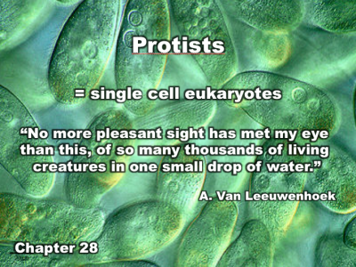 Chapter 28 | Protists