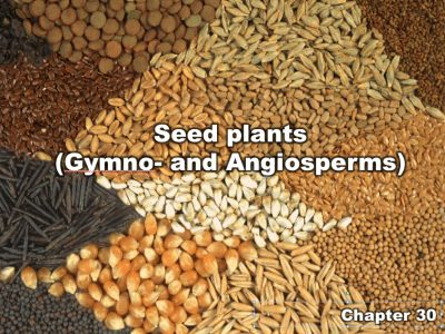 Chapter 30   Seed plants