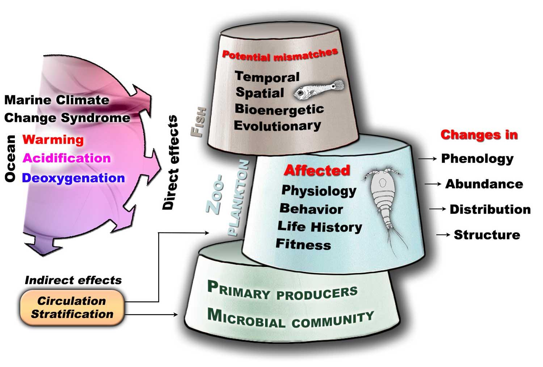 Figure02---main-effects_basic-cone1