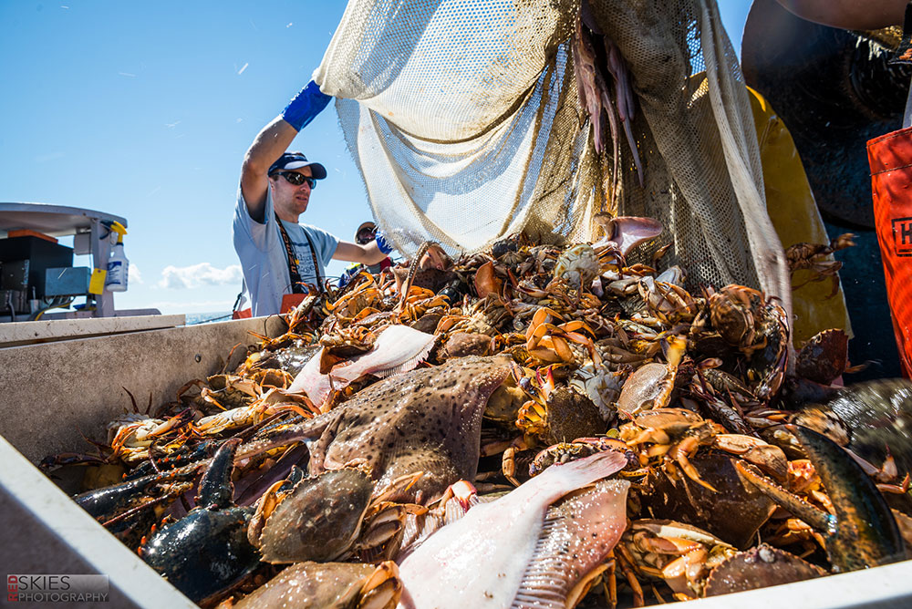 Massachussets Bottom Trawl Survey 2016-01