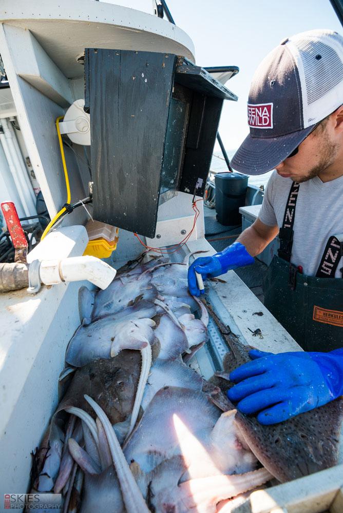 Massachussets Bottom Trawl Survey 2016-04