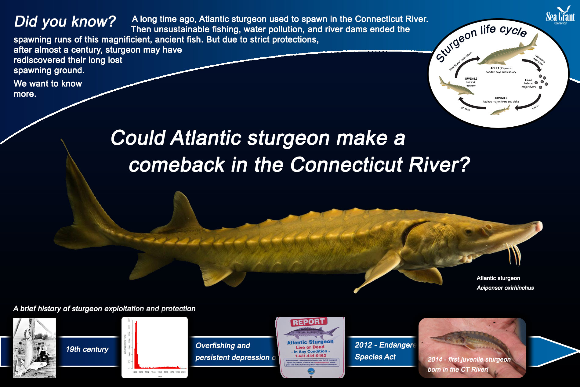 Atlantic-sturgeon-signage1