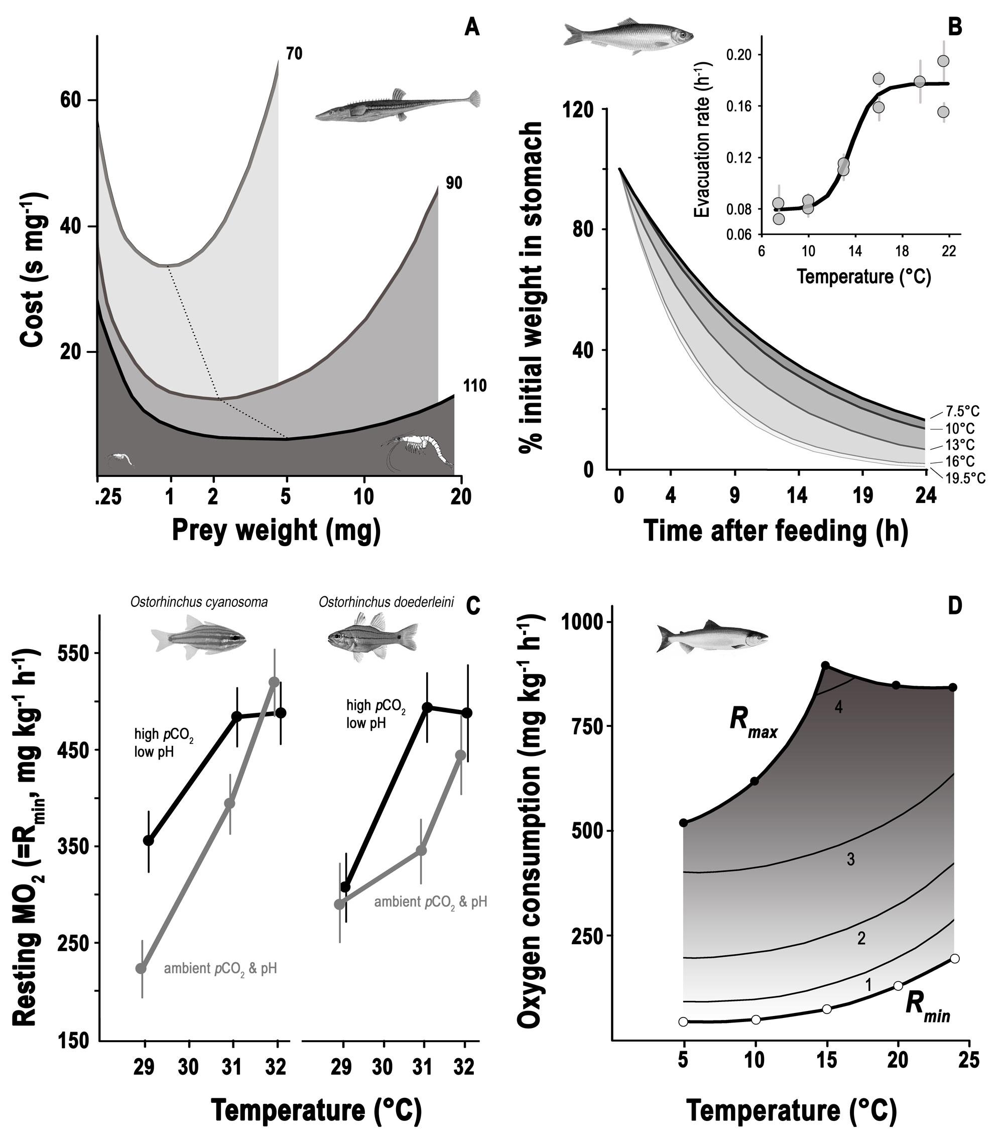 Fig02A-D---feeding-metabolism